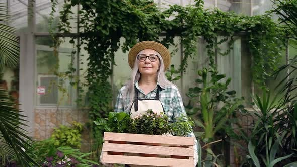 Thumbnail for Grey-Haired Woman in Hat Passing Through Beautiful Greenhouse with Box with Flowers