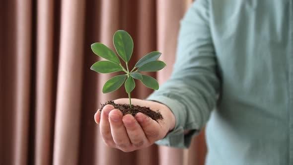 Handful of Soil Plant Growing