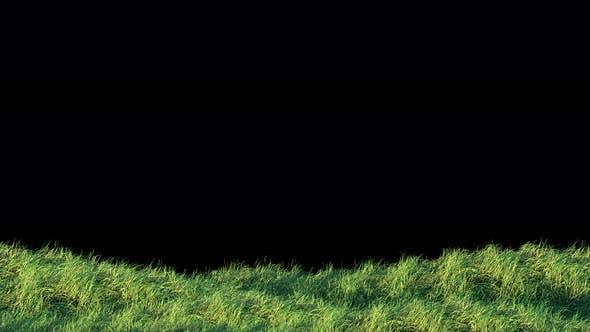 Blows Grass Loop 4K