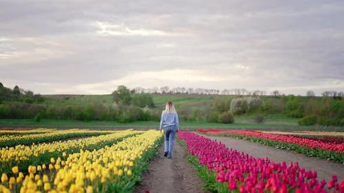 Unrecognizable Woman Walking Among Pink and Yellow Tulips in Touristic Park