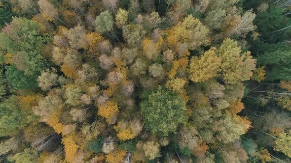Autumn View of Mixed Forests From Height Flight Over the Golden Trees