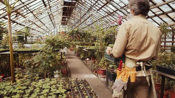 Thumbnail for High Angle View of Male Farmer Walking through Greenhouse