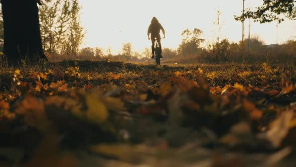 Man in Hood Riding Bicycle Through Autumn Forest at Sunset Background