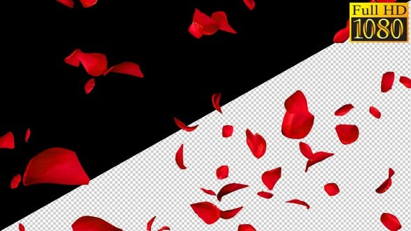 Falling Rose Petals On Alpha Channel Loops V2