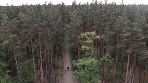 Cyclists riding bike on gravel road in forest. Gravel Cycling