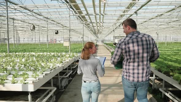 Thumbnail for Back View of Farmer Walking with a Box of Green Salad in a Greenhouse