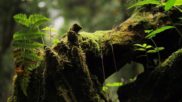 Thumbnail for Moss In Forest