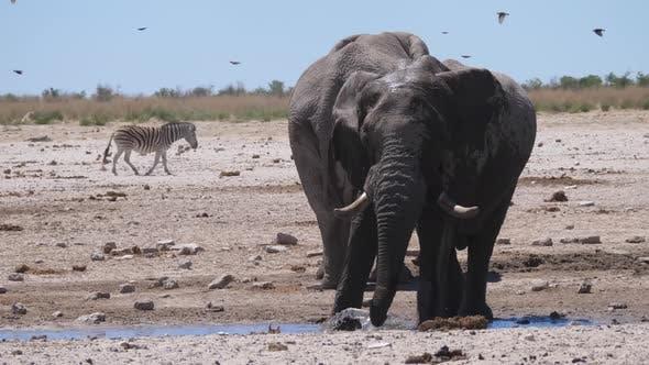 Elephant splashes himself with water