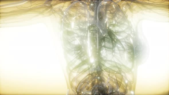 Thumbnail for X-Ray Image Of Human Body