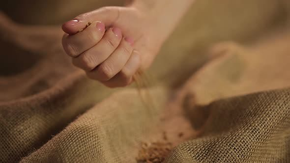 Thumbnail for Human Hand Carefully Pouring Handful of Selected Wheat Grain on Brown Sackcloth