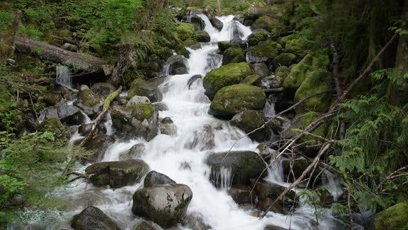Cover Image for Beautiful Static Shot Of Green Mossy Forest Spring With Fresh Water Flowing