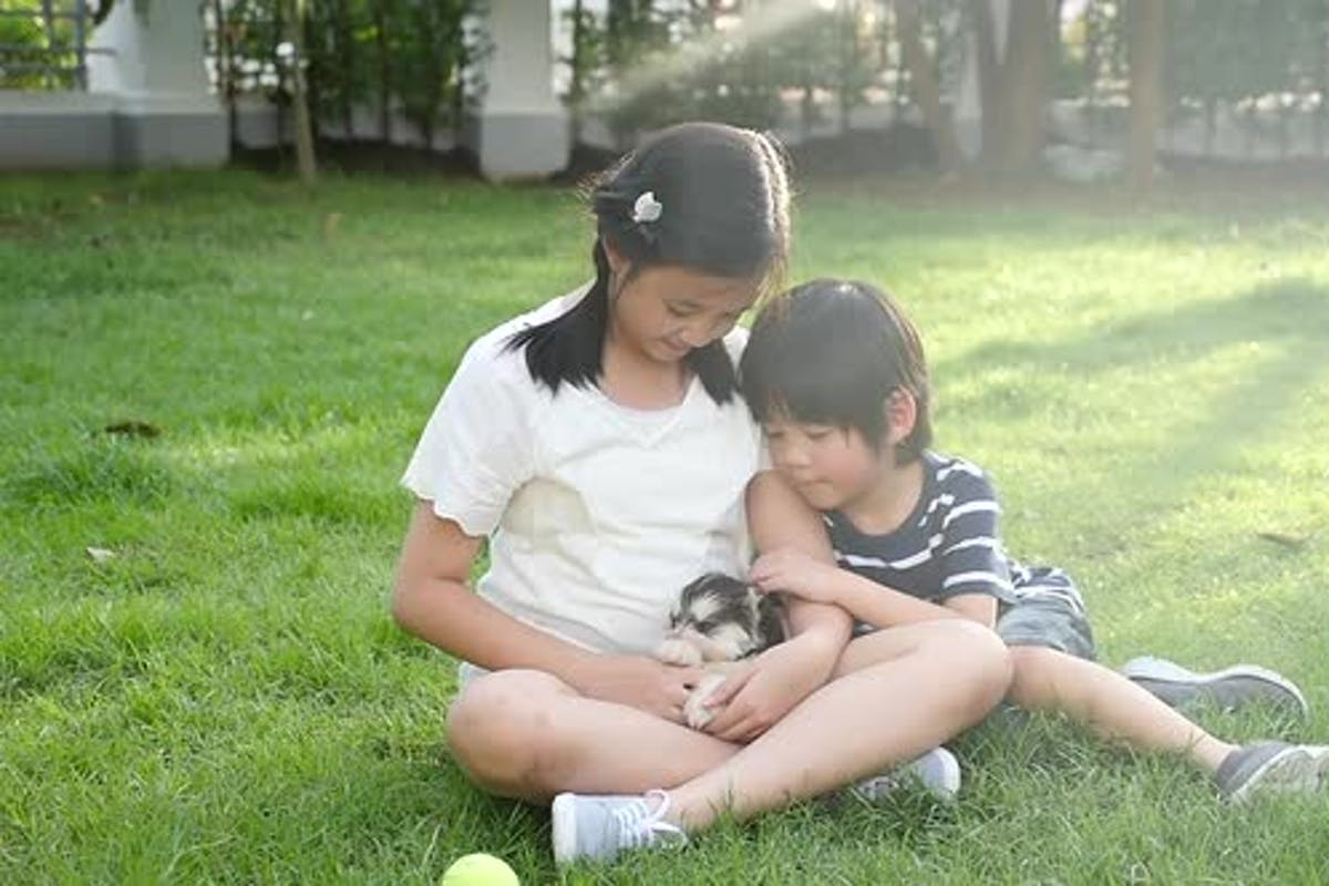 Happy Asian Children Playing With Siberian Husky Dog In The Garden Slow  Motion by lufi_morgan on Envato Elements