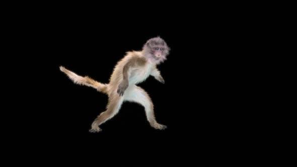 Monkey Dance HD