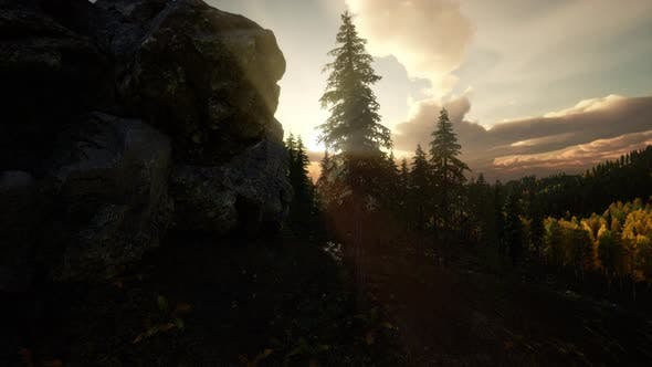 Thumbnail for Sunlight in Forest at Sunset