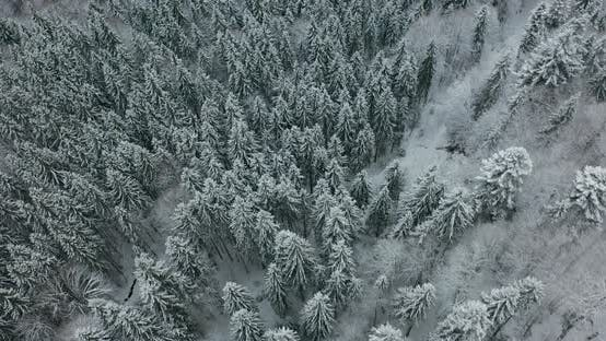 Thumbnail for Aerial View of a Frozen Forest with Snow Covered Trees at Winter. Flight Above Winter Forest in