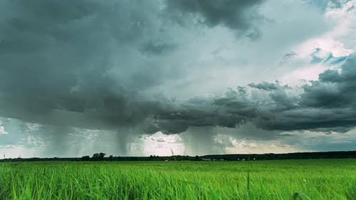 Rain Rainy Clouds Above Countryside Rural Field Landscape With Young Green Wheat Sprouts In Spring