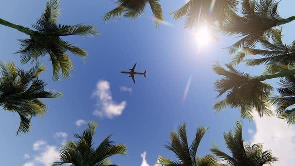 Thumbnail for Palm Trees, Sun and Airplane