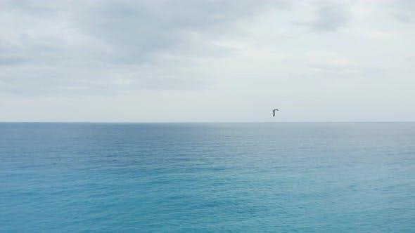 Suivi d'une mouette sur l'océan
