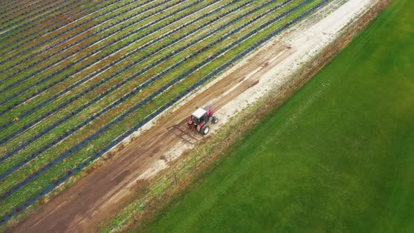 Thumbnail for A Tractor Works in a Field on a Berry Farm. Aerial Footage
