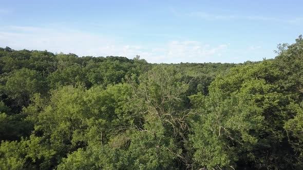 Drohne fliegt über Minnesota Hartholz-Wald in Sommer-Baldachin Baumkronen