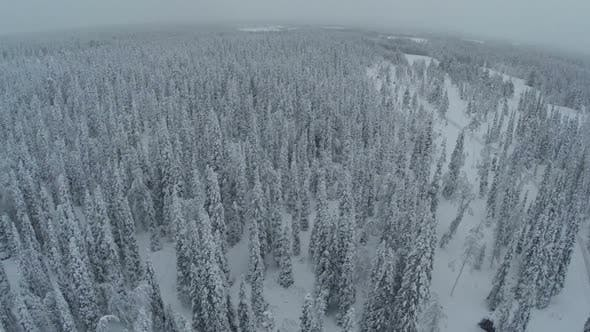 Thumbnail for Endless Expanse of Winter Pinery, Aerial View