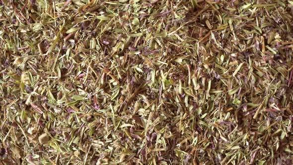 Thumbnail for Rotation Medicinal Herbs Thyme