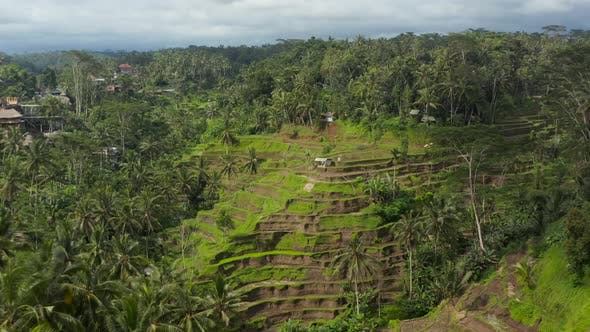 Slow Dolly Into Tilt Aerial View of Beautiful Rice Field Terraces and Farms on a Hill in a Tropical