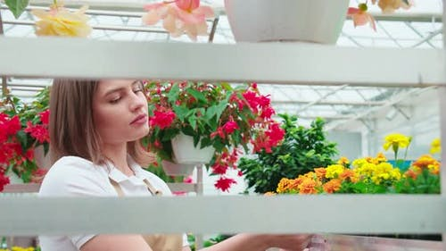 Female Florist Cultivating Colorful Flowers at Greenhouse