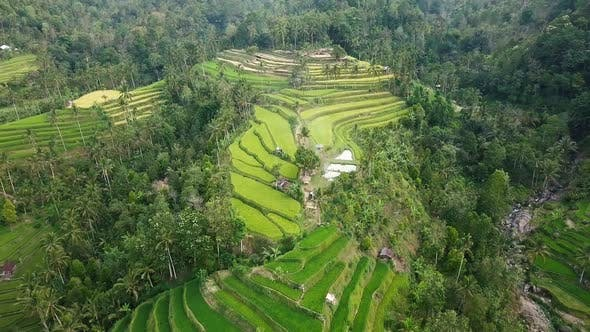 Thumbnail for Aerial Above Rice Terraces