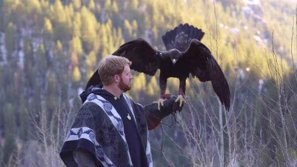 Thumbnail for Golden eagle perched on falconers arm