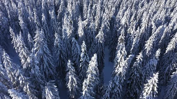 Thumbnail for Snow Covered Forest