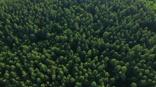 Aerial View Tops Of Forest Trees
