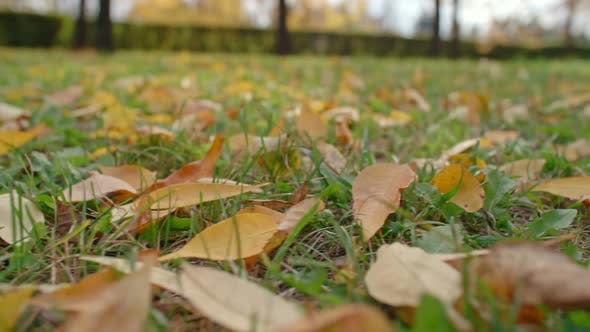 Cover Image for Yellow Leaves Lying on Green Grass