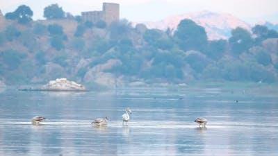 Flamingos in Natural Environment