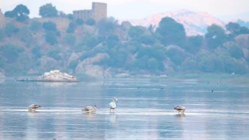 Flamingos in natürlicher Umgebung