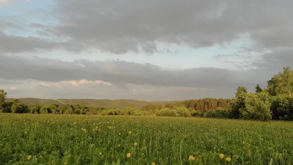 Thumbnail for Drone Flying Above Green Field with Yellow Flowers