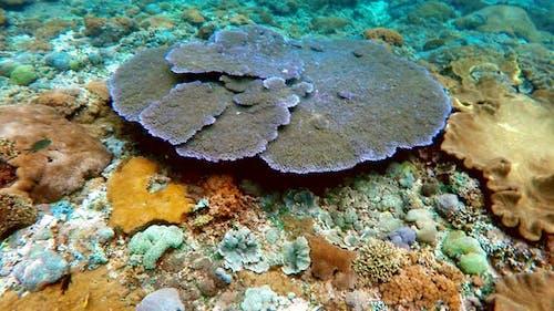 coral garden in indian ocean, Bali, Indonesia