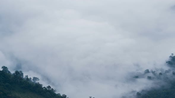 Thumbnail for Fog Moving Over Forest