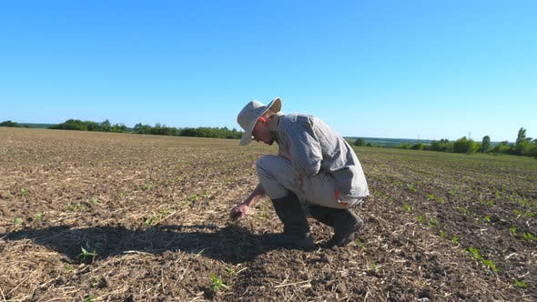 Profile of Angry Male Farmer Examining Dry Soil Around Green Sprouts on the Field