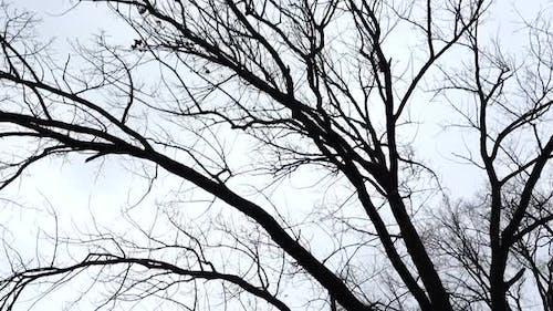 Zweige der Bäume