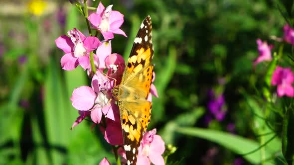 Butterfly and Flowers 4
