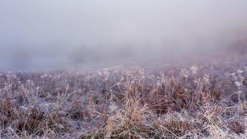Field in the Fog