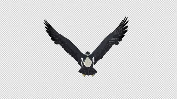 Thumbnail for African Eagle - 4K Flying Loop - Back View