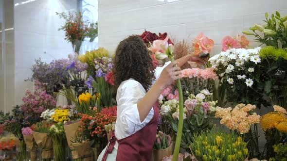 Thumbnail for Professional Florist Choosing Flowers for Bouquet