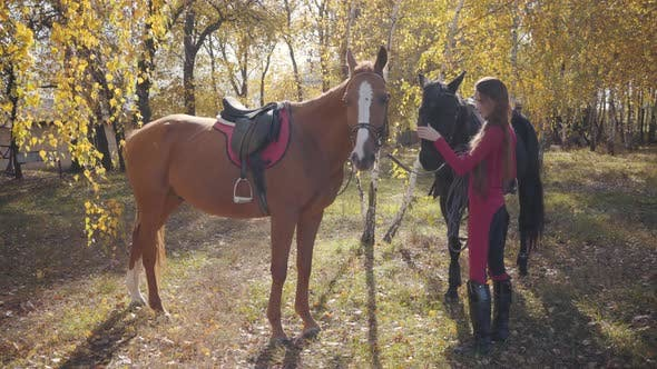 Thumbnail for Pretty Caucasian Female Equestrian Standing with Two Horses in the Autumn Forest
