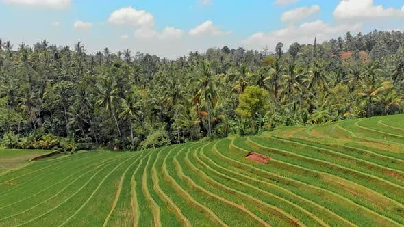 Rice Terraces Paddy