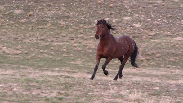 Thumbnail for Wild horse trotting across the landscape.