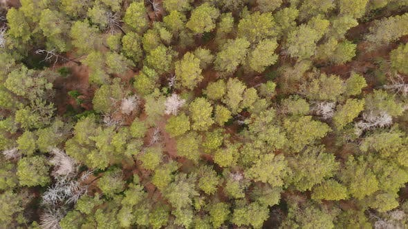 Aerial Shot of Autumn Forest in Siberian Natural Park Stolby