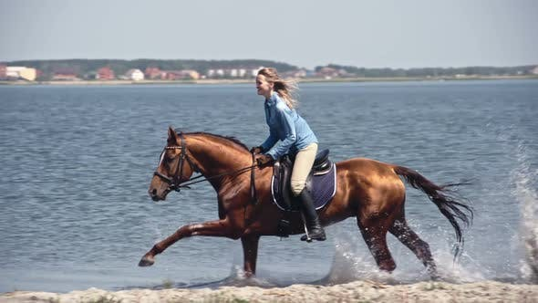 Cover Image for Fast Russian Don Horse Galloping on Water
