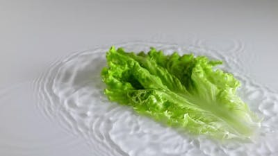 Lettuce Leaf Falls Into the Water